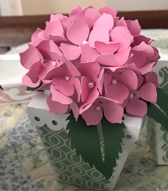 Pink Hydrangea Closeup