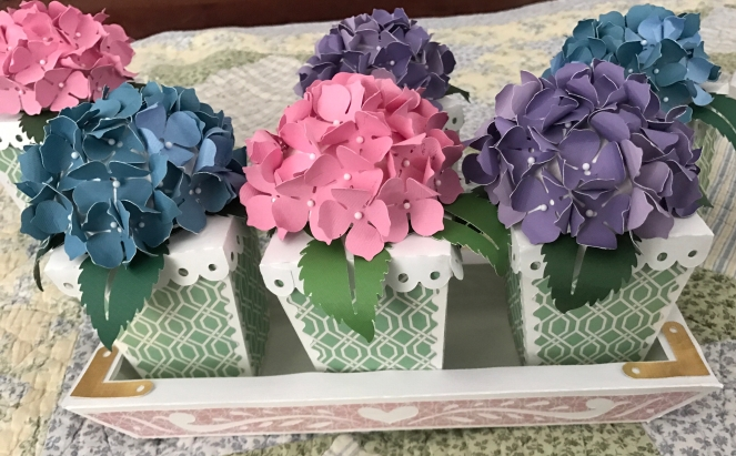 Completed tray with three hydrangea pots